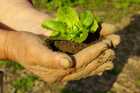 implanting: green plant in man hand