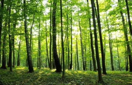 Zonlicht in het groene bos, de lente tijd
