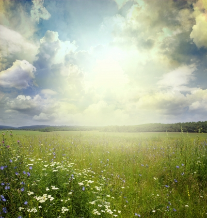 Green meadow under blue sky with clouds Stock Photo - 18028551