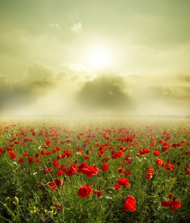 Poppy bloem in de lucht