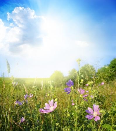 seasonic: Beautiful summer landscape