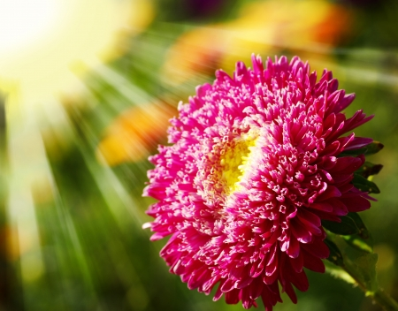 Beautiful flower on a natural green background photo