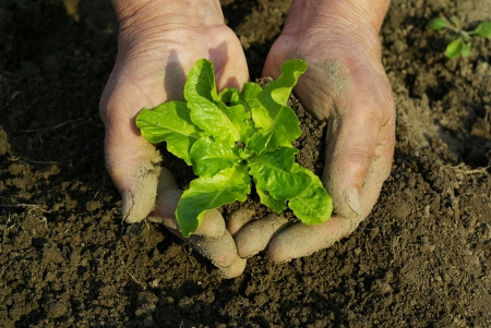 green plant in man hand Stock Photo - 18028623
