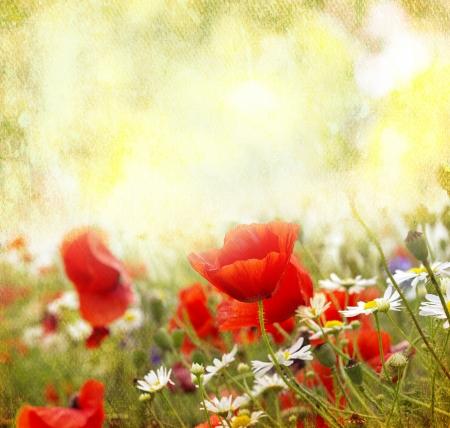 Grunge poppies background Stock Photo