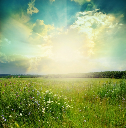 the natural world: Green meadow under blue sky with clouds