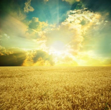 Gele weide onder blauwe hemel met wolken