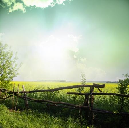 Sunset on field at summer Stock Photo - 18031516