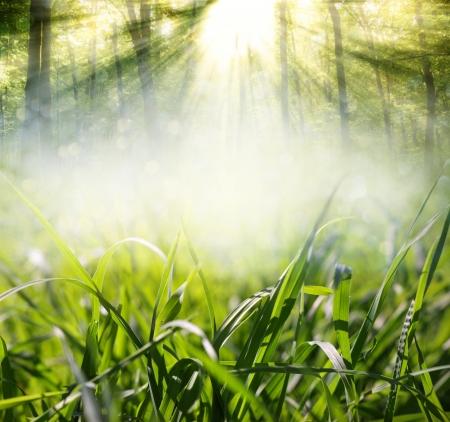 achtergrond met gras in de wei