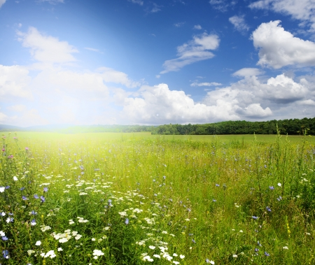 Green meadow under blue sky with clouds Stock Photo - 18054206