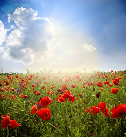 Red poppies on green field, sky and  clouds photo
