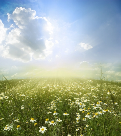 Beautiful summer landscape with daisies Stock Photo - 18054153