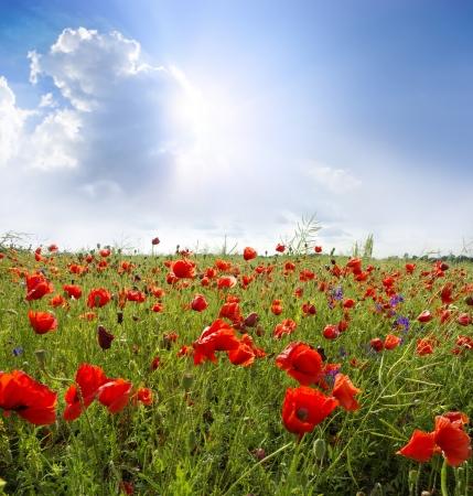 Poppy flower in the sky Stock Photo - 18054212