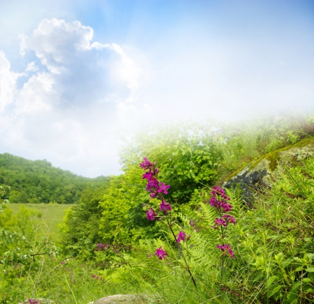seasonic: Flower field on sunny day.