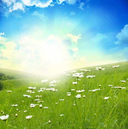 Field of daisies, blue sky and sun.  Stock Photo