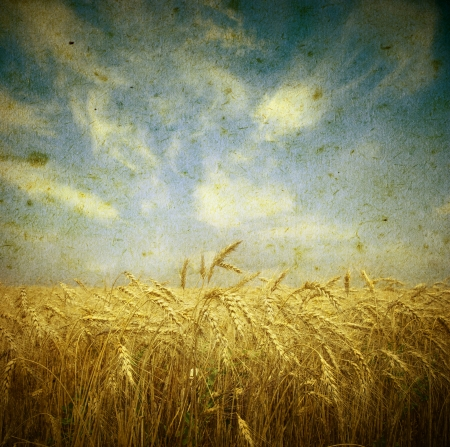 Field of wheat; vintage photo photo