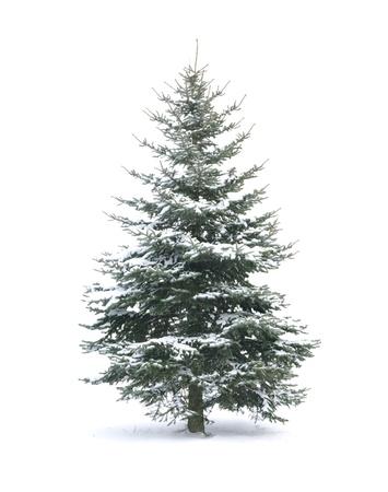 Christmas Tree - geïsoleerd over witte achtergrond