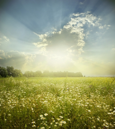 sunny sky: Green meadow under blue sky with clouds