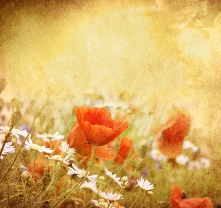 Grunge poppies background Stock Photo - 18074934