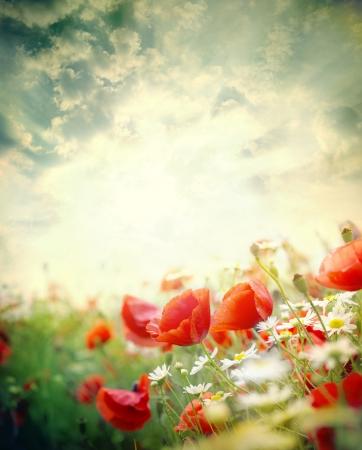sun flower: Poppy flowers in the sky  Stock Photo
