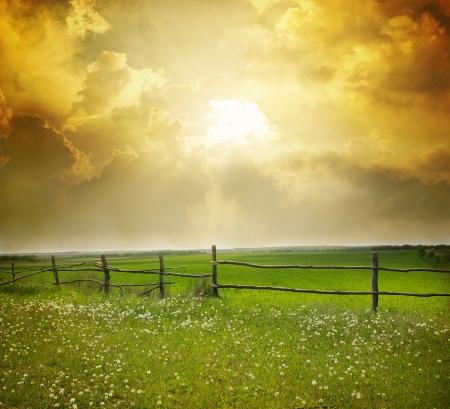 grassy field: sunset on field at summer  Stock Photo