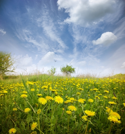 Spring flower field and blue sky. Stock Photo - 18074773