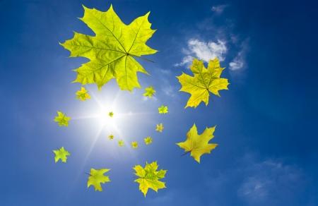 yellowautumn: Autumn fall leaves Stock Photo