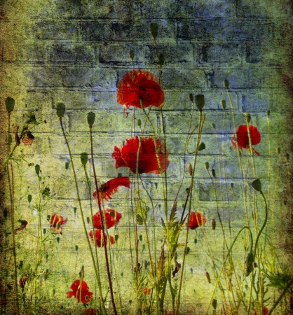 pasted: Photo of a poppies pasted on a grunge background