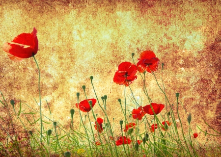 Photo of a poppies pasted on a grunge background Stock Photo - 18075008