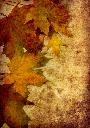 yellowautumn: Photo of a autumn  leaf on a grunge background Stock Photo