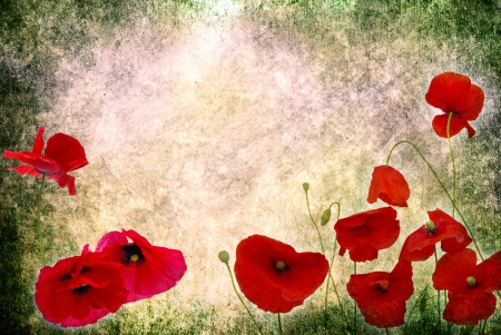 Photo of a poppies pasted on a grunge background photo