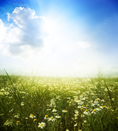 Beautiful summer landscape with daisies  Stock Photo - 18105940