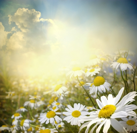 Beautiful summer landscape with daisies  photo