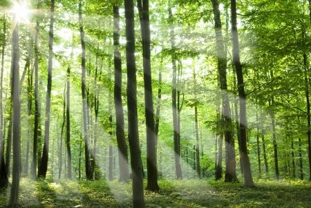 Fairytale forest sunlight and shadows