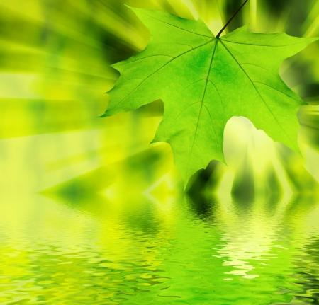 botanica: Fresh spring leaves glowing in sunlight