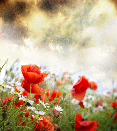 Grunge poppies background  photo