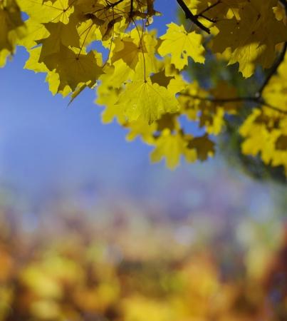 yellowautumn: autumn background Stock Photo