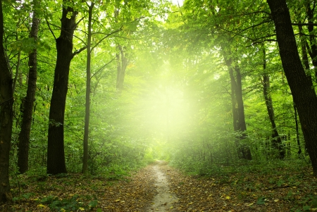 Sunshine in the green forest
