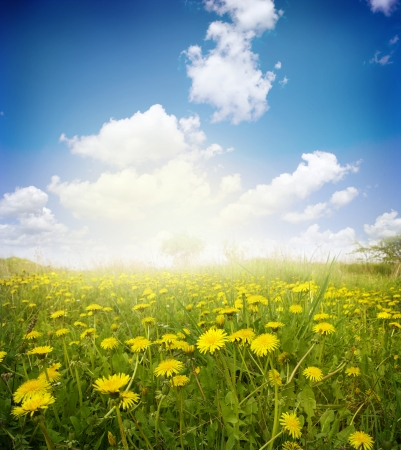 seasonic:  Yellow meadow under blue sky with clouds