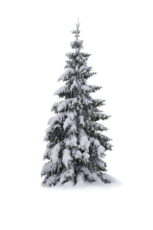 black and white cone: Christmas Tree - Isolated on white background Stock Photo