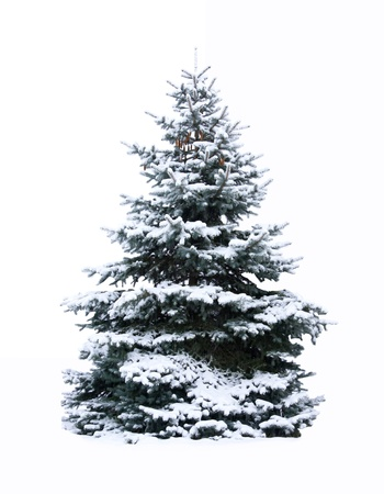Christmas Tree - Isolated over White background.