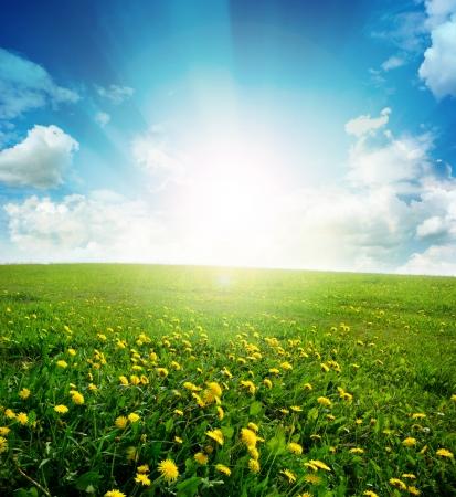 Geel weide onder blauwe hemel met wolken