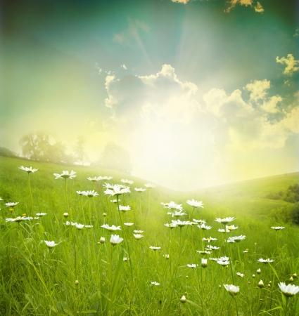 Gebied van madeliefjes, hemel en zon.