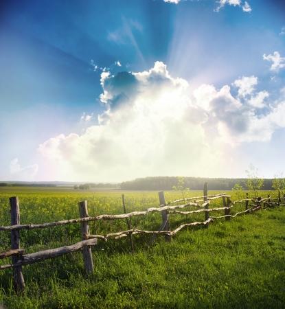 zonsondergang op veld in de zomer Stockfoto