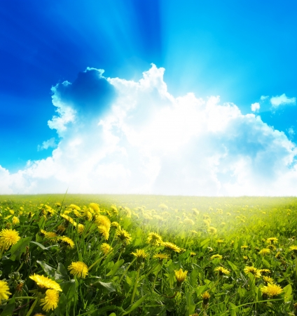 Yellow meadow under blue sky with clouds  Stock Photo - 18265413