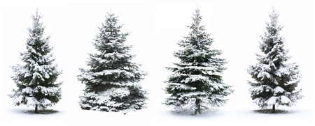 tree decorations: Christmas Tree - Isolated over White background