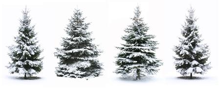 Kerstboom - geïsoleerd op witte achtergrond