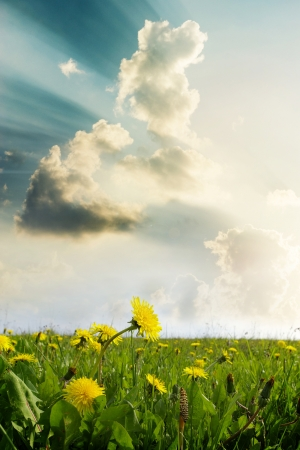 Yellow meadow under blue sky with clouds Stock Photo - 18265450