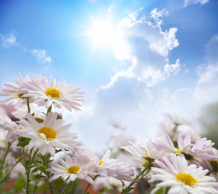 Beautiful summer landscape with flowers photo