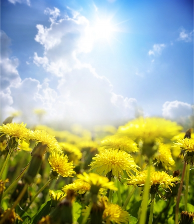 Yellow flowers under sky  Stock Photo - 18953458