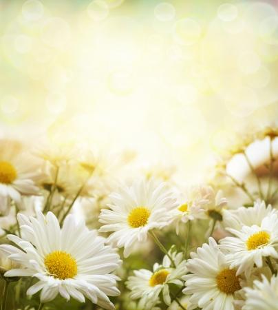Mooie voorjaar achtergrond met bloemen